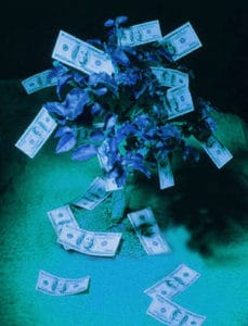 moneytree-2